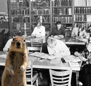 Squirrel at Lawrence Tech Library, 1956