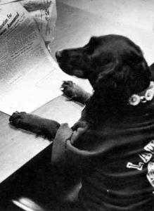 Lawrence Tech Dog